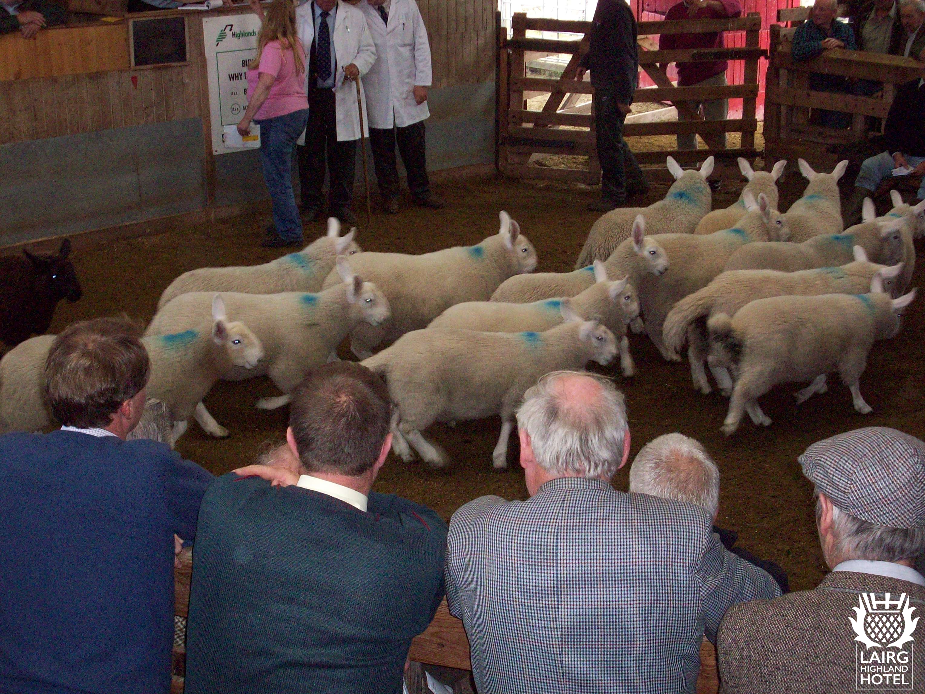 Annual Lamb Sale-ga