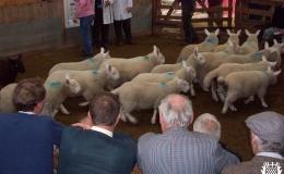 Annual Lamb Sale-ga